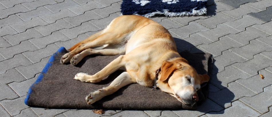 Rettungshundeprüfung der Johanniter