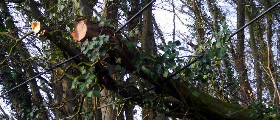 Nettetal – Telefonleitung von Baum bedroht